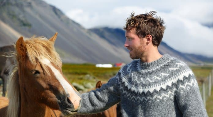 What makes Icelandic horses so special