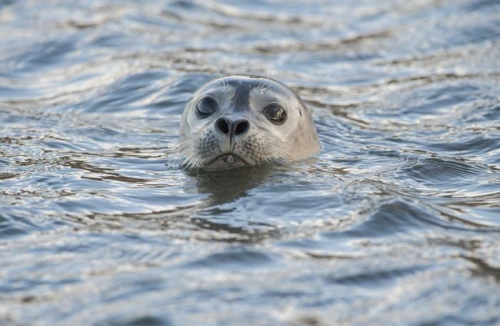 Seal Watching Iceland