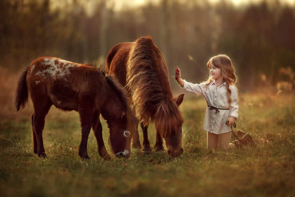 Little girl petting a horse