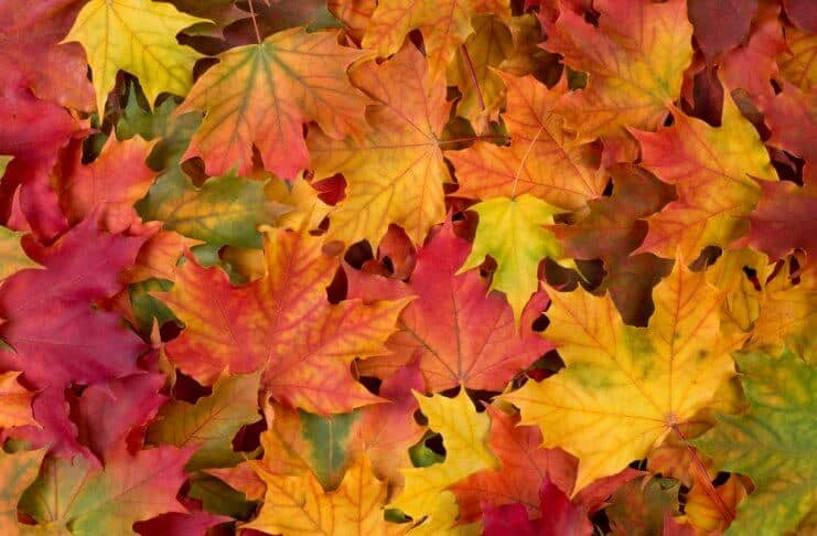 Fall leaves are a beautiful part of Iceland's weather in September