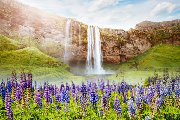 Summer in Iceland- The season series