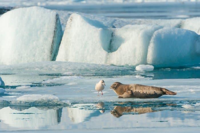 Seal Watching Iceland
