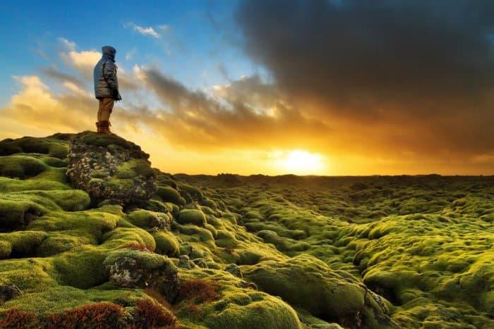 Mossy lava fields of Eldhraun, Iceland at sunrise in winter
