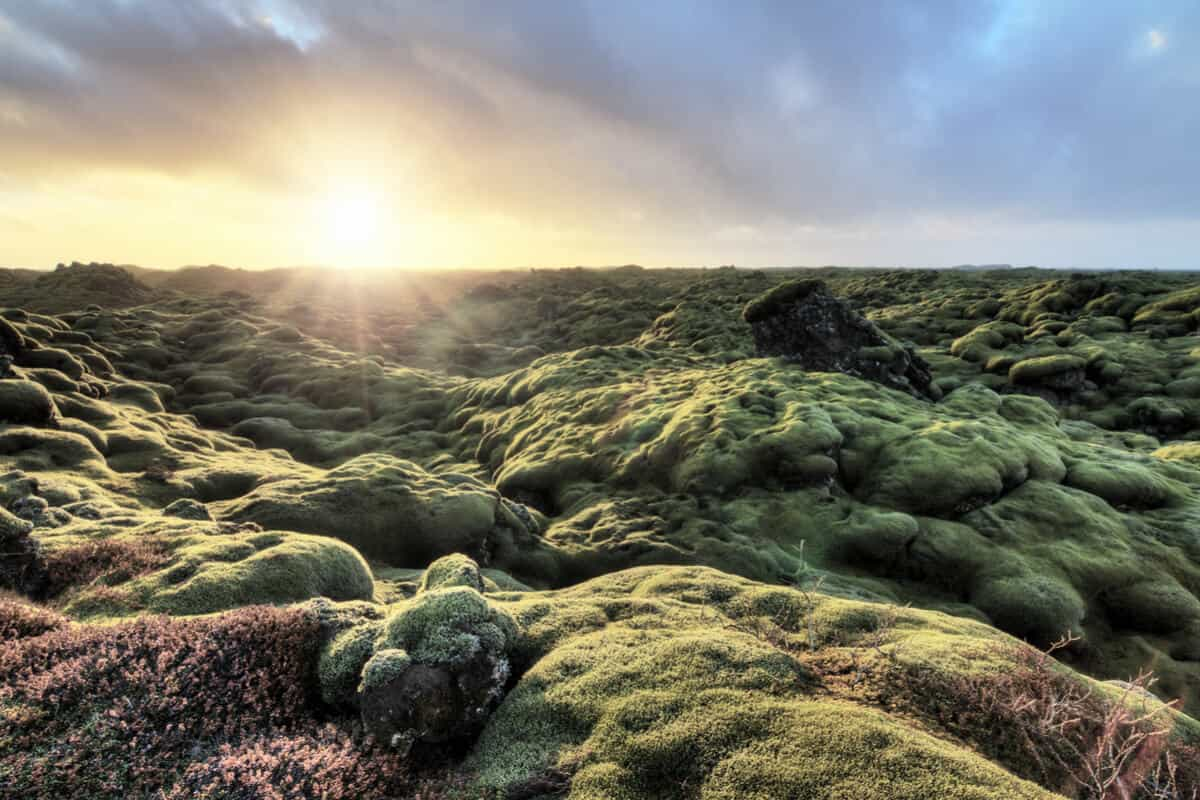 Eldhraun Lava Field in South Iceland