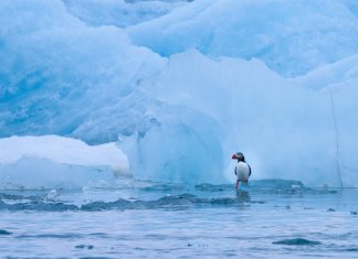 Iceland glacier melting affect animals like a penguin