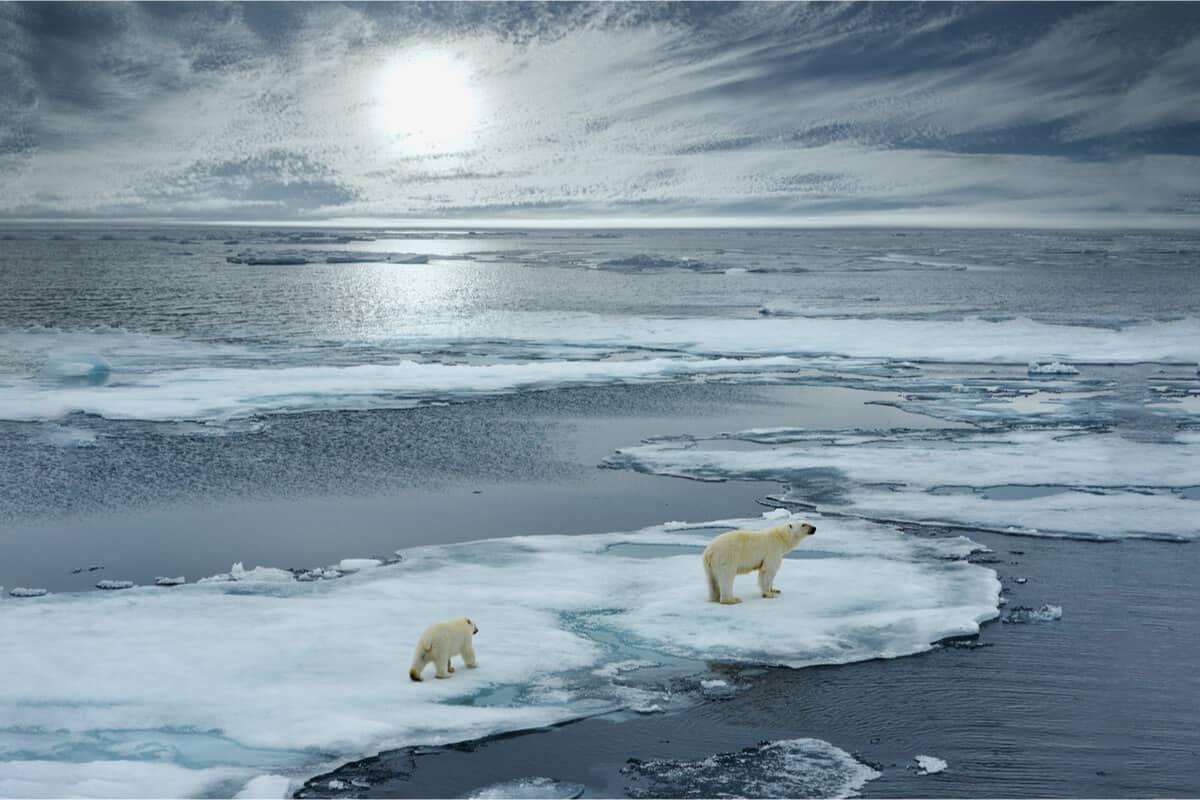 Iceland glacier melting and polar bears