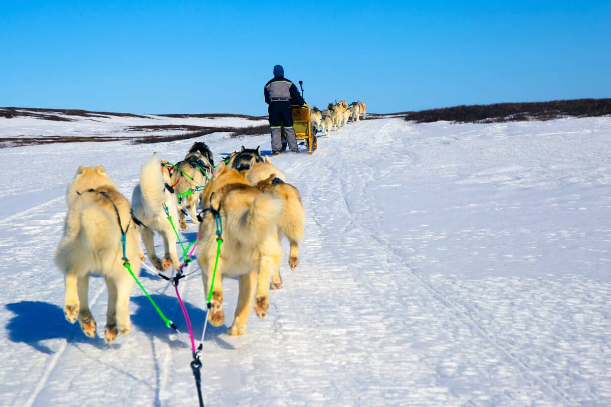 Dog sledding in Iceland in the snow